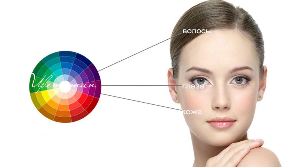 цветовой круг лицо девушки определить цветотип внешности