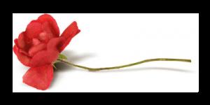 цвет роза