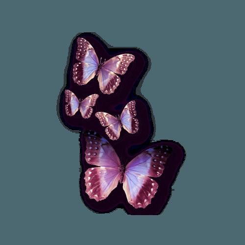 цвет фиолетовая бабочка